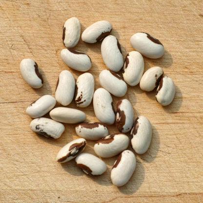 Golden Wax Improved Beans