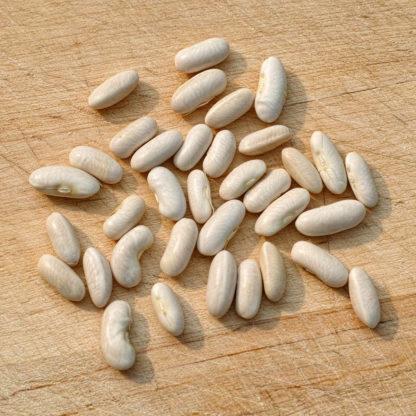 Gold Rush Bean Seeds