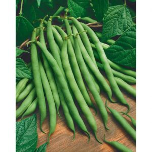 Bush Blue Lake Green Beans