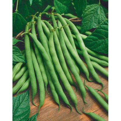 Bush Blue Lake Green Beans
