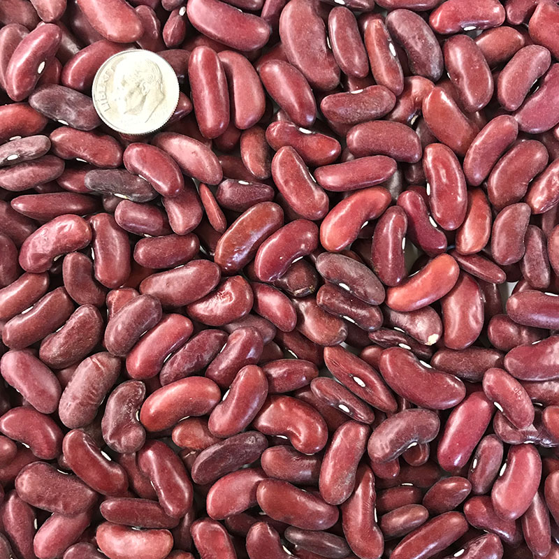 Dark Red Kidney Bean Seeds Ne Seed