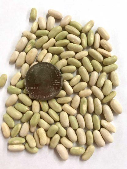 Petite Filet Bean