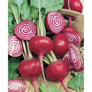 Chioggia Italian Heirloom Beet