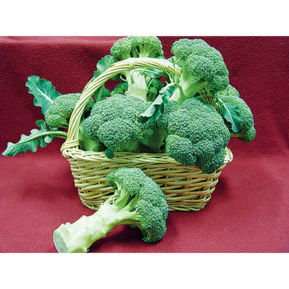 Hurdle F1 Hybrid broccoli