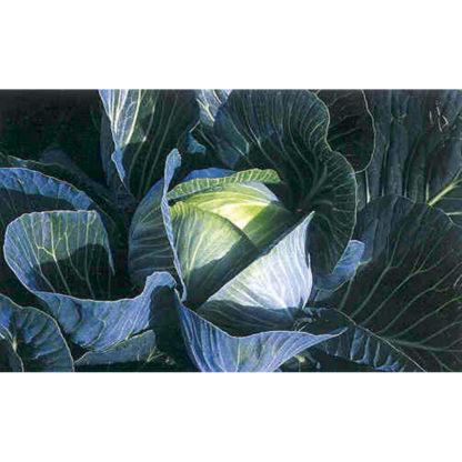 Deep Blue F1 Hybrid Cabbage