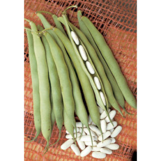 Cannellino dry Italian bean from our Italian Gourmet Seed Collection