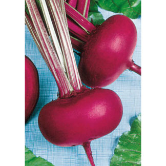 Piatta D'Egitto Italian Beet Seeds from our Italian Gourmet Seed Collection