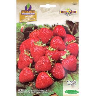 Italian Strawberry Seeds