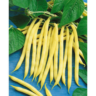 Golden Wax Beans