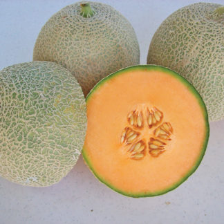 Sante F1 Hybrid Long Shelf Life Cantaloupe