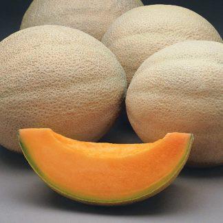 Athena F1 Hybrid Cantaloupe Seeds