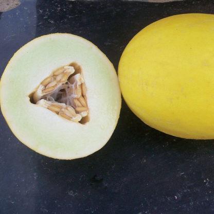 Goldilocks F1 Hybrid Canary Melon
