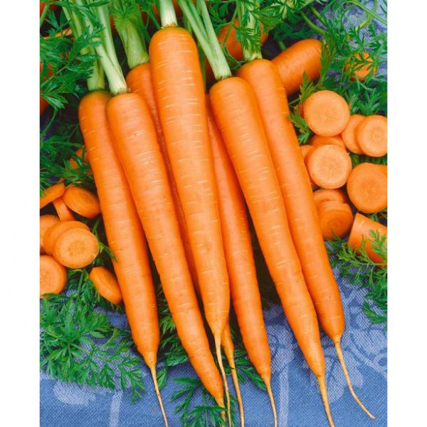 Imperator 58 Carrot