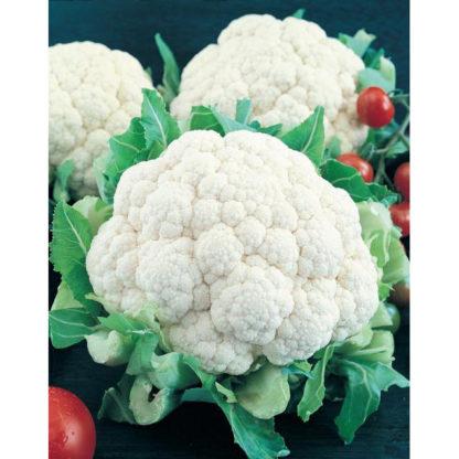 Early Snowball Cauliflower