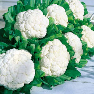 Snow Crown F1 Hybrid Cauliflower Seeds