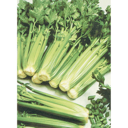 Tall Utah 52-70 Celery