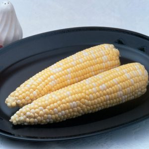 Ambrosia Sugary Enhancer Corn