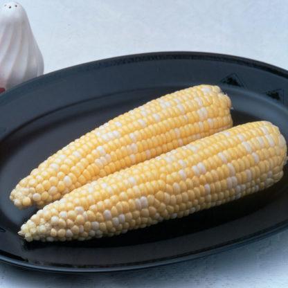 Ambrosia Sugary Enhancer Corn