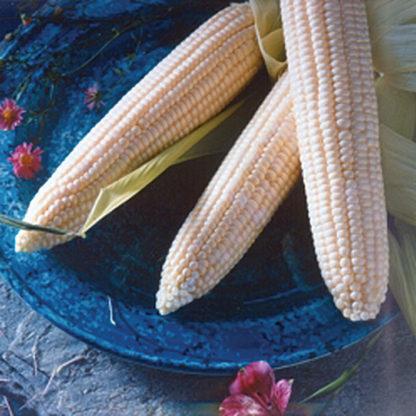 Argent White Hybrid Sweet Corn