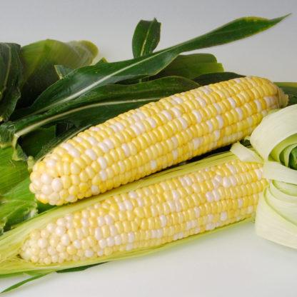 Sweetness Sweet Corn Seeds