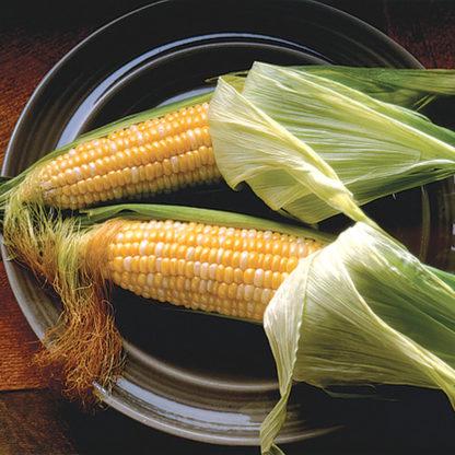 Quickie Bicolor Sweet Corn