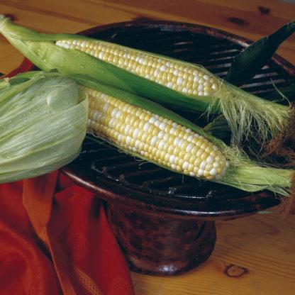 Trinity Bicolor Sweet Corn