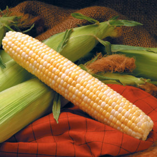 Providence TripleSweet Sweet Corn Seeds