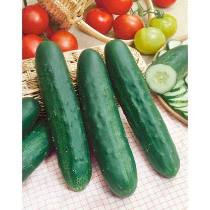 Long Green Improved Cucumber Seeds