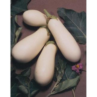 Casper White Eggplant