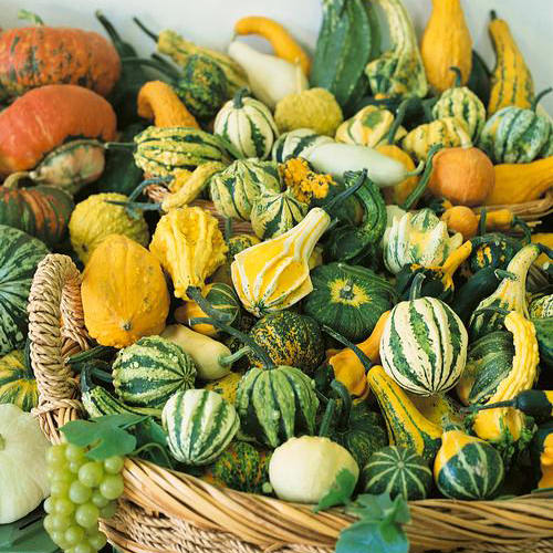 small fruited gourd mix seeds ne seed