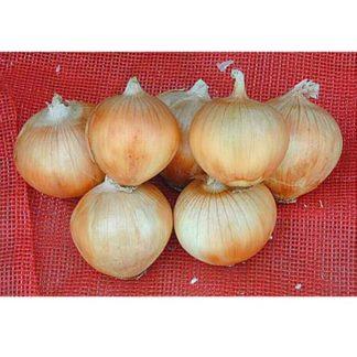 NuMex Serenade Onion