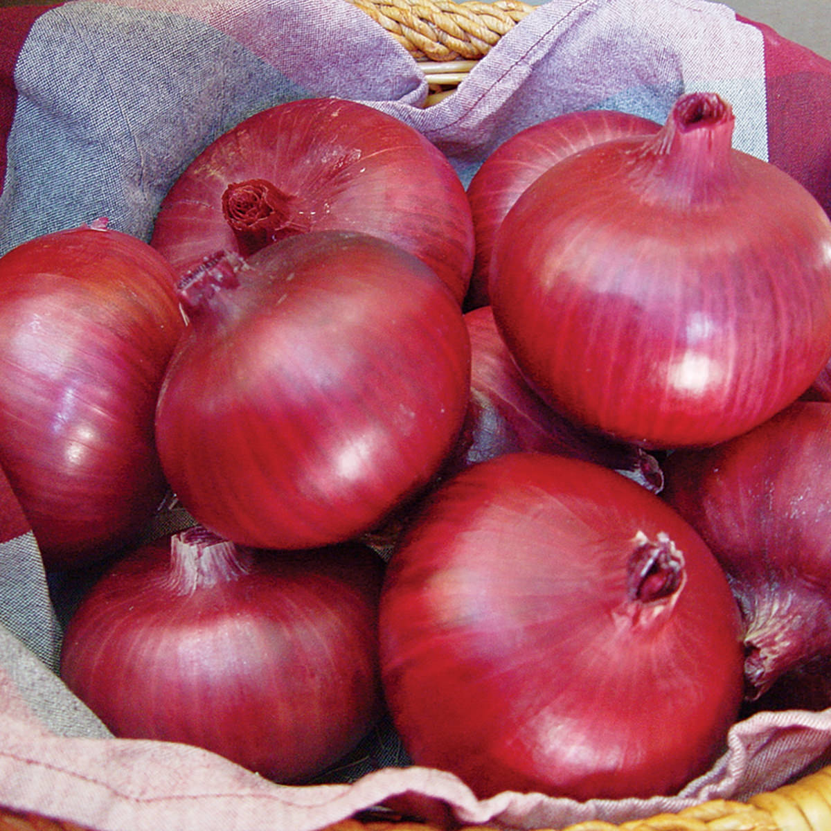 how to grow red onions from onions