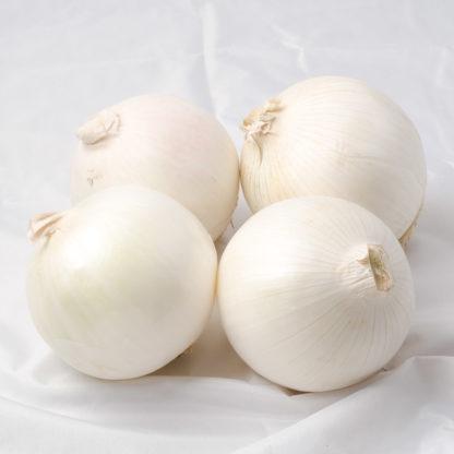 Sugar Loaf F1 Hybrid Onion