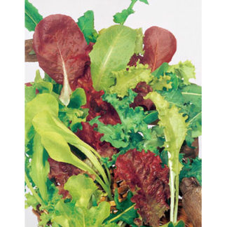 Misticanza Mesclun Mix from our Italian Gourmet Seed Collection