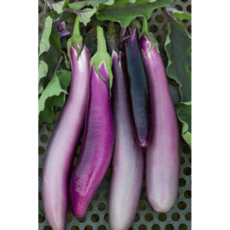 Ping Tung Heirloom Eggplant