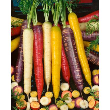 Rainbow Blend Carrot