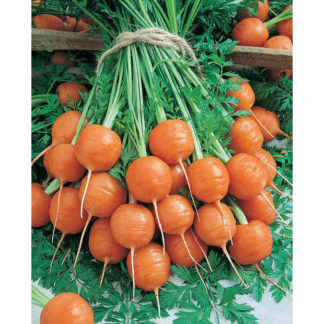 Parisian Gourmet Carrot