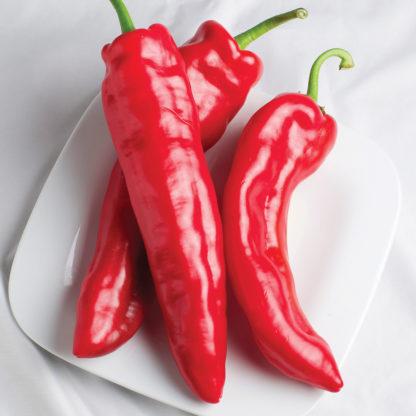 Dolce Rojo F1 Hybrid Corno di Toro type Pepper