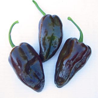 Mulato Isleno Poblano Type Pepper