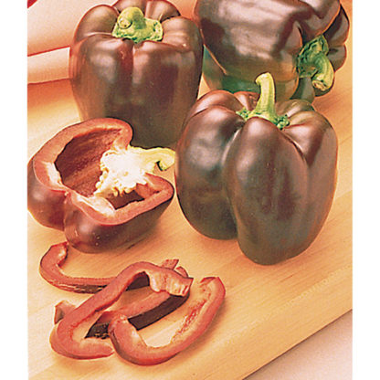 Chocolate Beauty Sweet Bell Pepper