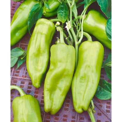 Cubanelle Sweet Fryer Pepper Seeds