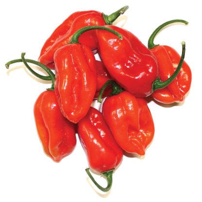 Xaman Rojo F1 Hybrid Habanero Pepper