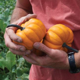 32432-Orangita-Pumpkin