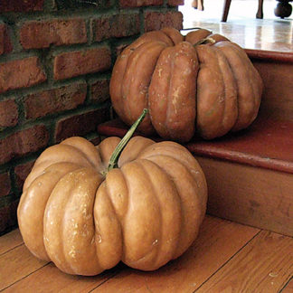 Fairytale (Musque de Provence) French Heirloom Pumpkin