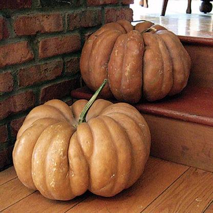 Fairytale (Musque de Provence) French Heirloom Pumpkin