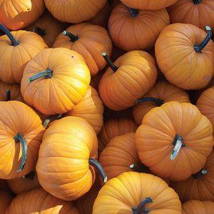 32440-Flatso-Pumpkin