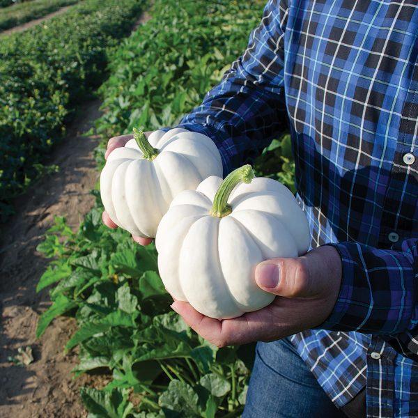 Casperita Personal Size White Pumpkin