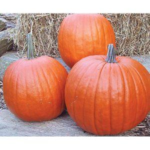 32490-Howden-Pumpkin