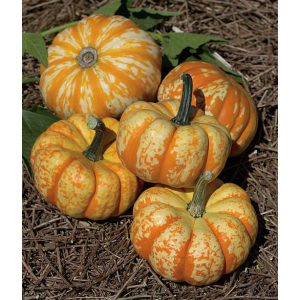32501-Hooligan-PMT-F1-Pumpkin