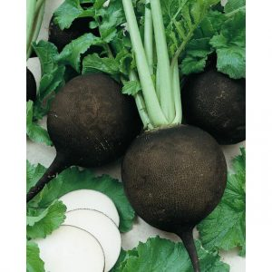 Black Spanish Round Winter Radish